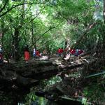 A walk in the 'jungle'