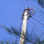 Electricity pole near the school