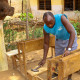 Local carpenter making the desks