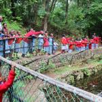 Crocodiles in site
