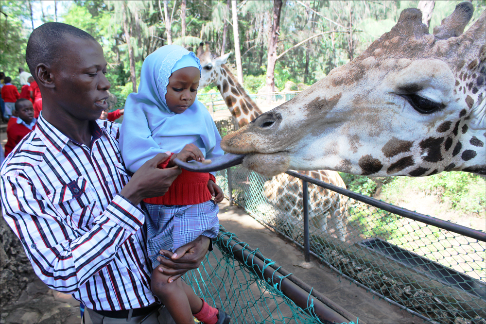 Feeding Mr Giraffe